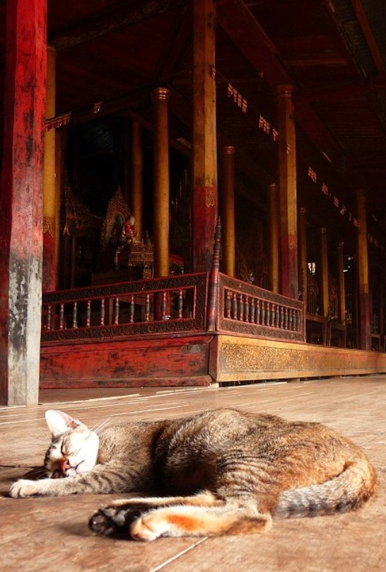 mostlycatsmostly:  Nga Hpe Chaung (Jumping Cat Monastery), Inle Lake, Myanmar (via Graphica)