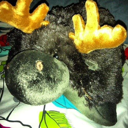 zyanyaandrupertadventures:  Day 6- Mine, Chocolate Moose! Thanks Carrie for my christmas gift.
