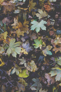 photography autumn leaves vertical photographers on tumblr