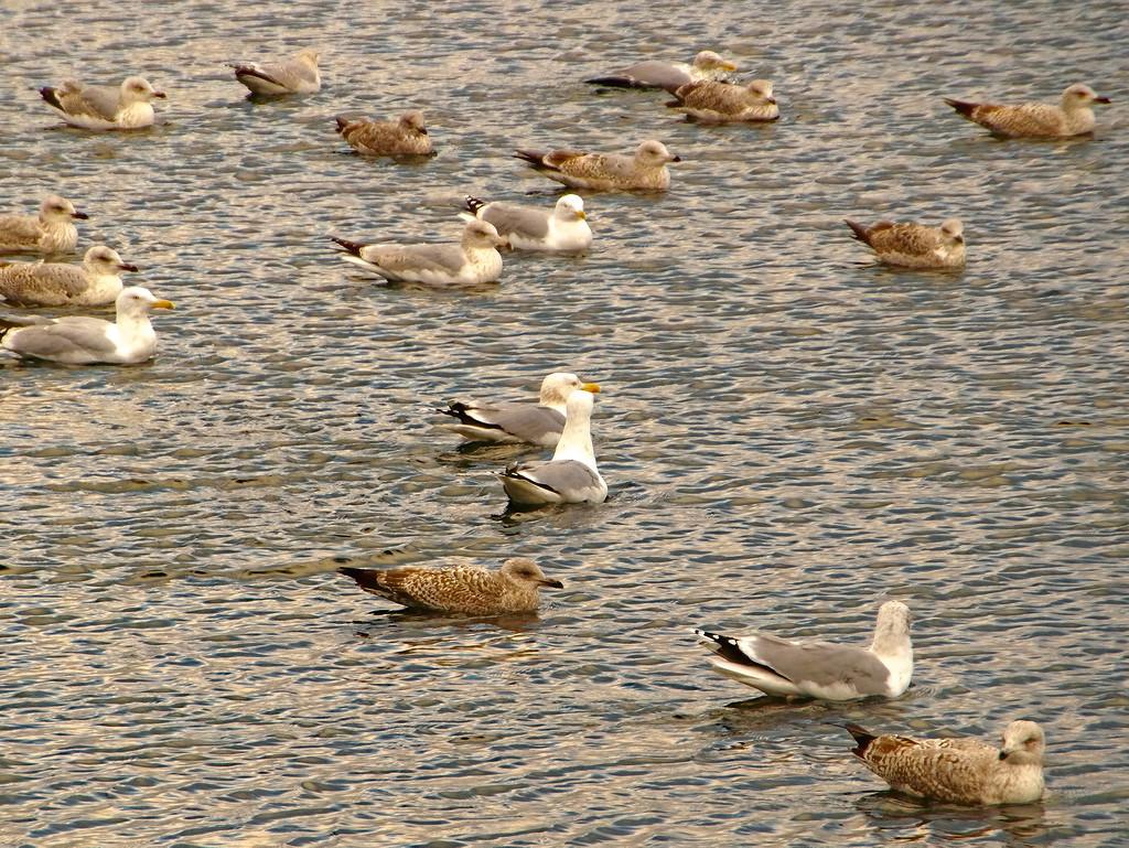 #seagull#animal#bird#my#water
