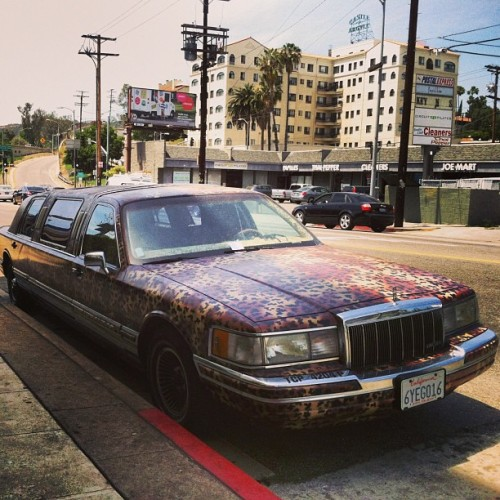 #hollywood #parking #ticket #leopard #print #limo #sunshine #franklin
