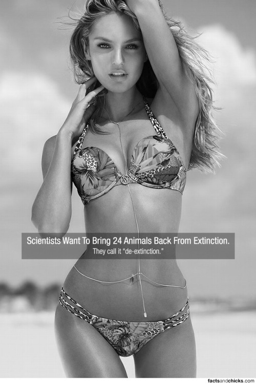 "factsandchicks:  Scientists Want To Bring 24 Animals Back From Extinction. They call it ""de-extinction."" source submitted by Carlos Alayon  I think i should be called re-volution"