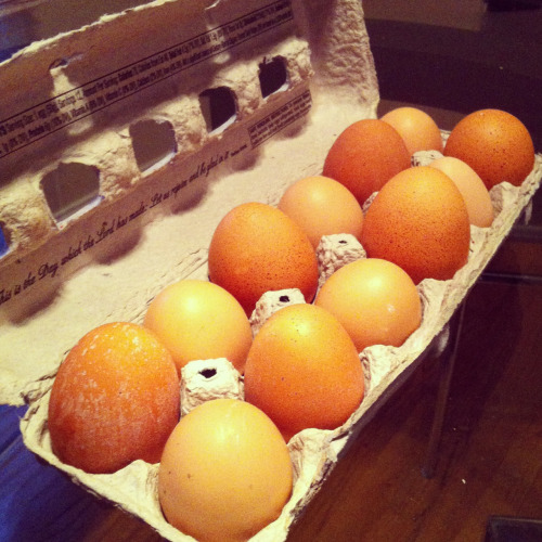 Farm fresh free range organic eggs from my yogi friend's hens!  How cute!