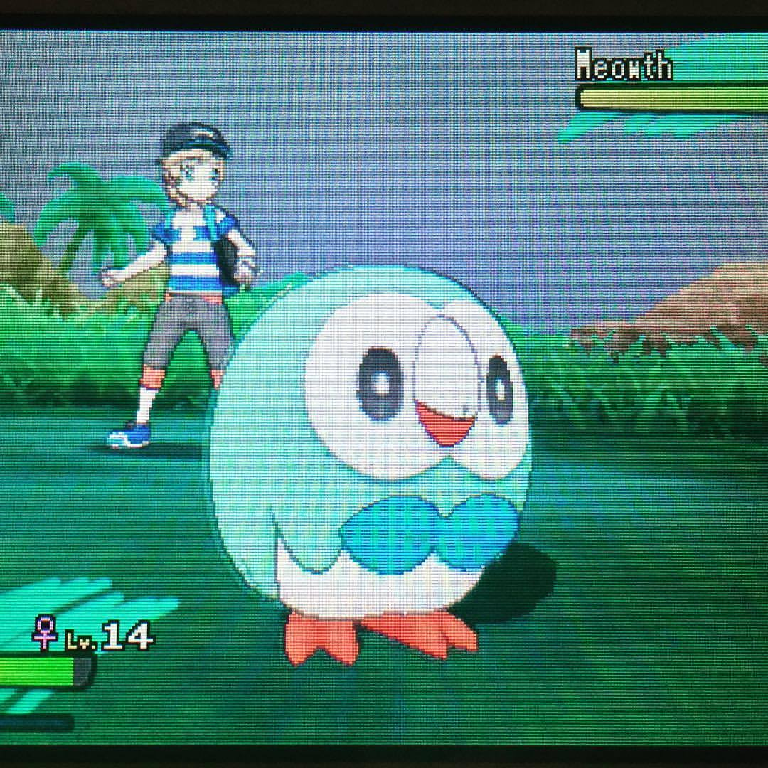 Finally got my Shiny Rowlet after 55 days of soft resetting!!!#pokemonsunandmoon #shinypokemon #softresetting #pokemon #nintendo #3ds