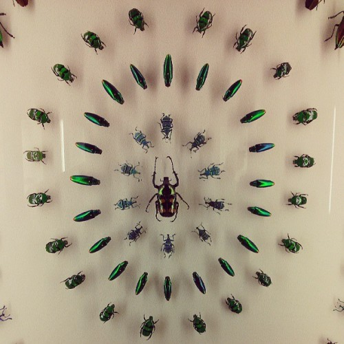#beetles #taxidermy (at Audubon Insectarium)