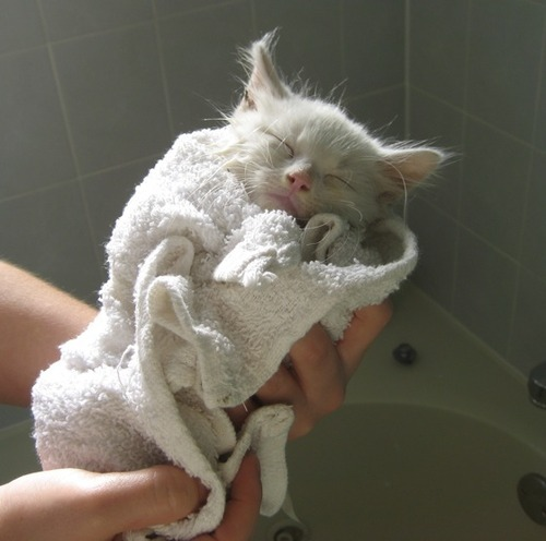 """Mama was right. Hot bath is very relaxing."" Photo via LoveMeow"