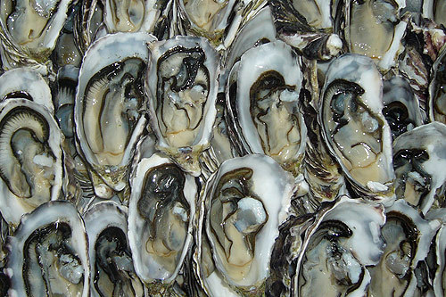 dtybywl:  coffin-bay-oysters11.jpg