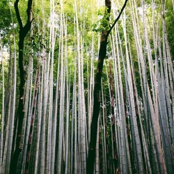 #vscocam #Bamboo (at 竹林の小径)