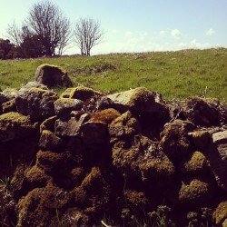 #latergram #landscape #moss #wall #scenic  (at Scotstown Moor)
