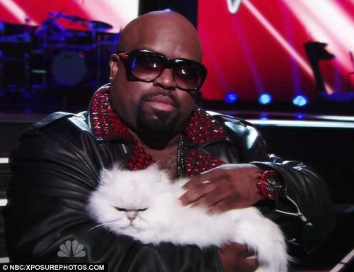 "So, I'm watching season two of ""The Voice"" for the first time and Cee Lo and his cat are cracking me the fuck up."