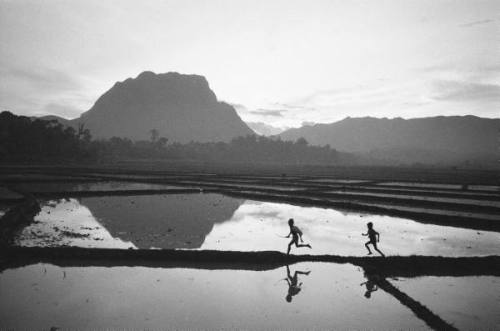 Boys running through flooded rice paddy, Thailand, 1960. by John Dominis