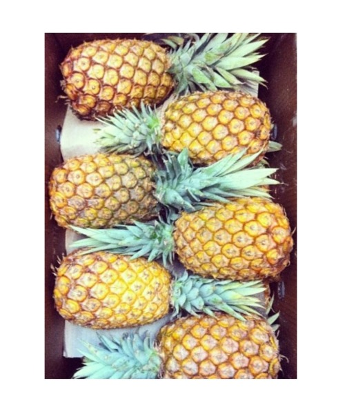 clubocean:  pineapple my love