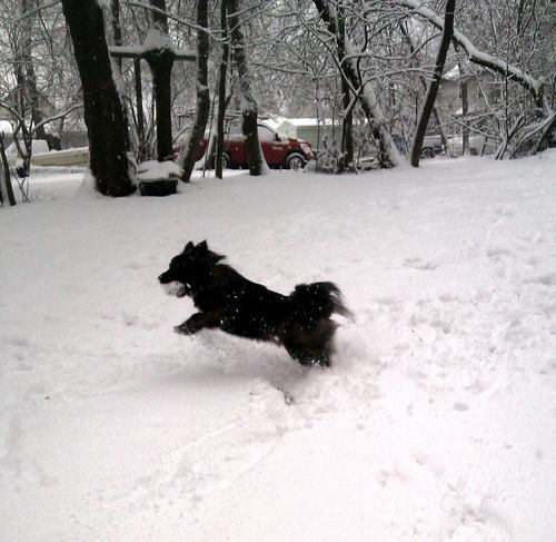 Giuseppe enjoying our snow day.
