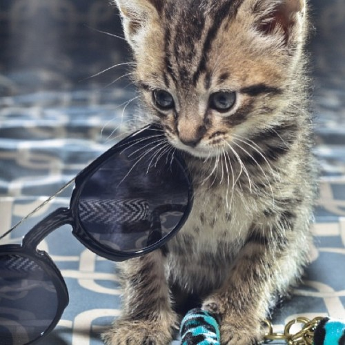 The cuteness level is out of control. See more of the Cat Issue at eidemagazine.com. #meow #kittyporn #catfashion