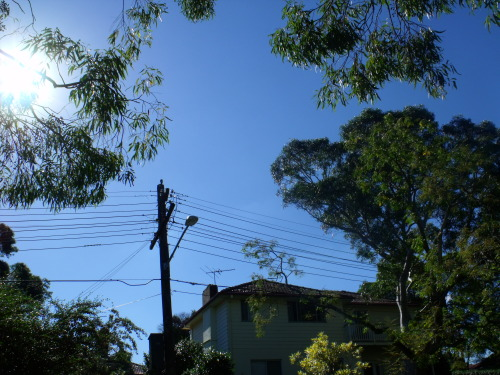 Photo 1 : Urban Nature Shot (With Sun Streak)