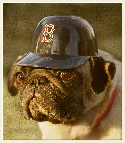 It's a dog with a Red Sox helmet on. Happy New Year.