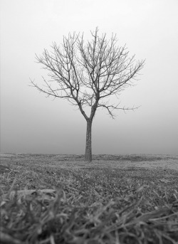 tree by Jeremy Klapprodt on Flickr.  © Jeremy Klapprodt Excellent fine art image