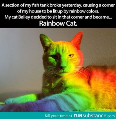 funsubstance:  Rainbow cat  WE NEED TO SURGICALLY ATTACH A POPTART TO THAT RAINBOW CAT