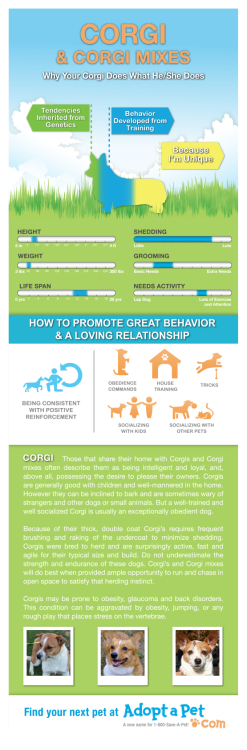 Adopt a Pet sent me this awesome corgi infographic. For any of those considering corgis.  One cannot stress the shedding. OH THE SHEDDING. And the barking. OH THE BARKING. But the love! The incredible love. And they are total clowns. Ridiculous dogs.  Put the love / work in. Reap years of enjoyment of a happy healthy dog.  http://blog.adoptapet.com/infographics/#Corgi Find ADOPTABLE CORGIS here: http://www.adoptapet.com/s/corgi-puppies-and-dogs-for-sale