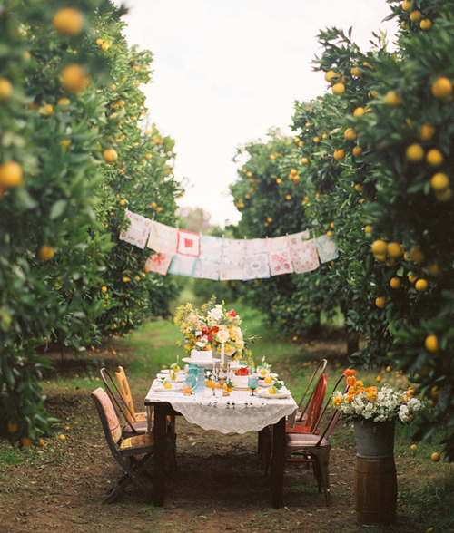 desolatesea:  mypoetcard:  Outdoor Dinner Party  oh my i wish i could do this for my birthday party!