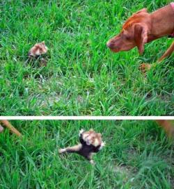 funnywildlife:    Attack!!