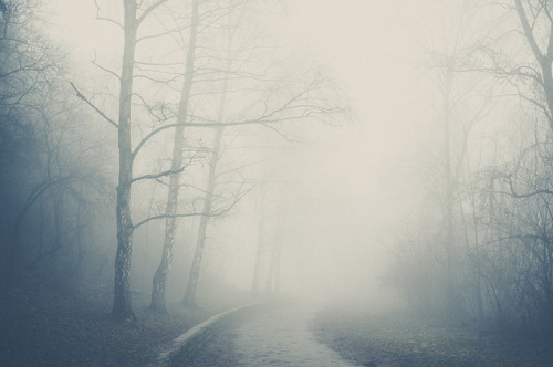 greekg0ds:  Foggy morning by benman31