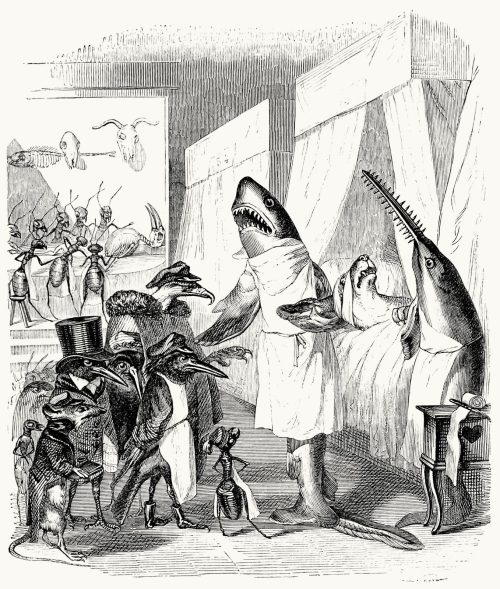 oldbookillustrations:  And you played dead? J-J. Grandville, from Vie privée et publique des animaux (Public and Private Life of Animals), under the direction of P. J. Stahl, Paris, 1867. (Source: archive.org)