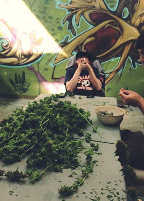 top-choice:  Lightin one up during the trim sesh