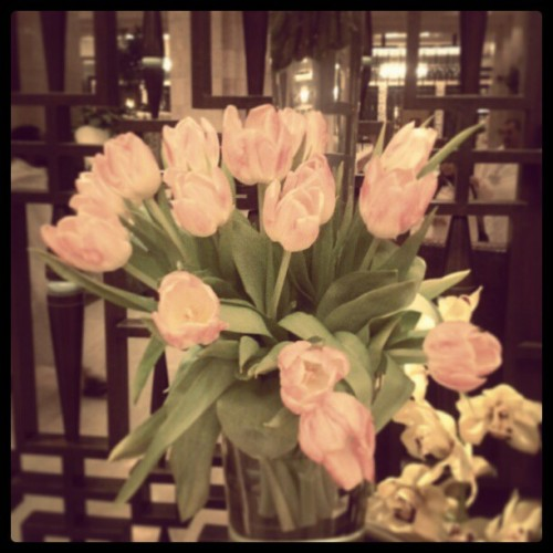 Look what I found #favorite #Tulip #amazing #beauty #elegant #beautiful #gorgous #pink #warm #found #look #hotel #fairmont_hotel #Mekka #lovely #heart #love #loving_nature #instaedit #instaflower #instanature #great  (at Mövenpick Hotel & Residence | فندق موڤنبيك)