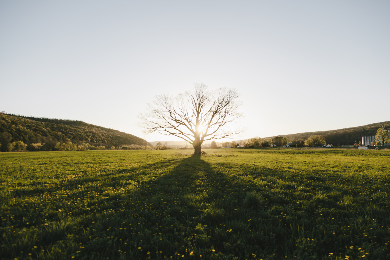 tylerphenes:  The lone tree.   Hey y'all! I know I already reblogged this, but if you want to check out my actual photography, head over to my site.