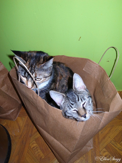 Cats in a bag.