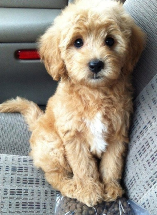This lil doggie looks like a teddy bear i had once.