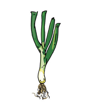 Scallions: The most ubiquitous of the bunch. Read more: 4 Tasty Types of Onions | RealSimple.com