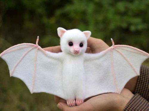 Baby Albino Bat #cute#bats#animals#albinobat