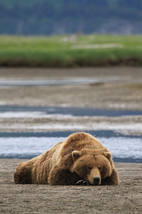 h4ilstorm:  Sleepy Bear (by toryjk)