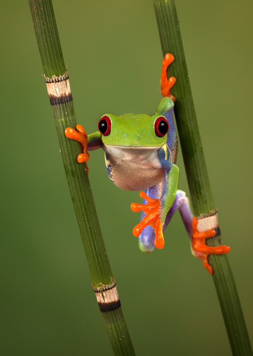 the-colors-of-our-earth:  Hanging around copyright: Peter Reijners