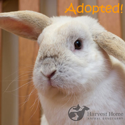 ADOPTION RULES! Congratulations to Dudley the Rescued Rabbit. He was adopted this week. We are extremely happy to report that Dudley now has a bunny girlfriend. Dudley along with his lagomorph lady will live happily ever after together!