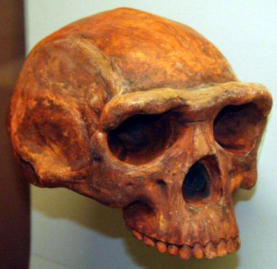 """Early Humans Lived in China 1.7 Million Years Ago  An extinct species of tool-making humans apparently occupied a vast area in China as early as 1.7 million years ago, researchers say. The human lineage evolved in Africa, with now-extinct species of humans dispersing away from their origin continent more than a million years before modern humans did. Scientists would like to learn more about when and where humans went to better understand what drovehuman evolution. Researchers investigated the Nihewan Basin, which lies in a mountainous region about 90 miles (150 kilometers) west of Beijing. It holds more than 60 sites from the Stone Age, with thousands of stone tools found there since 1972 — relatively simple types, such as stone flakes altogether known as theOldowan. Researchers suspect these artifacts belonged toHomo erectus, """"thought to be ancestral toHomo sapiens,"""" Hong Ao, a paleomagnetist at the Chinese Academy of Sciences in Xi'an, told LiveScience. [Photos: New Human Ancestors from Kenya]   The exact age of these sites was long uncertain. To find out, Ao and his colleagues analyzed the earth above, below and in which stone tools at the Shangshazui site in the Nihewan Basin were found. The tools in question were stone blades potentially used for cutting or scraping. The scientists analyzed the way in which the samples of earth were magnetized — since theEarth's magnetic field has regularly flippednumerous times over millions of years, looking at the manner in which the magnetic fields of minerals are oriented can shed light on how old they are. The researchers discovered this site in northern China might be about 1.6 million to 1.7 million years old, making it 600,000 or 700,000 years older than previously thought. Horse, elephant and other fossils suggest the area back when the stone tools were made was mainly grassland interspersed with patches of woodland. A lake between the mountains there was probably a major attraction for hominid explorers, providing w"""
