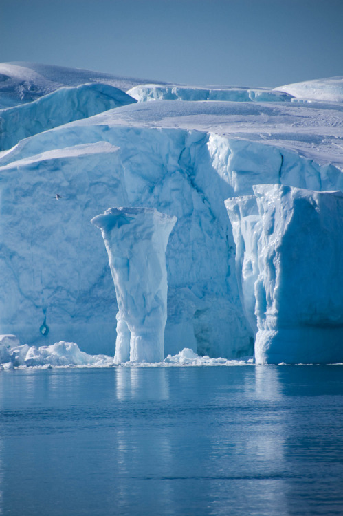 llbwwb:  Greenland (by Nancy Carels)