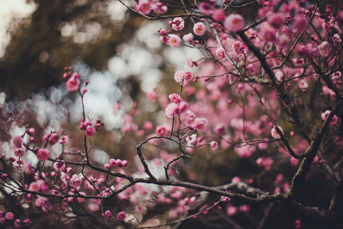 ileftmyheartintokyo:  Spring by motoitaly on Flickr.