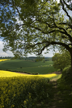 lndnwlkr:   Woodborough, Nottinghamshire, England (by NutGoneFlake)