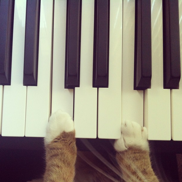 😻 He's practicing inverted triads but his paws only stretch so far. #catsofinstagram #piano #whiskers #music