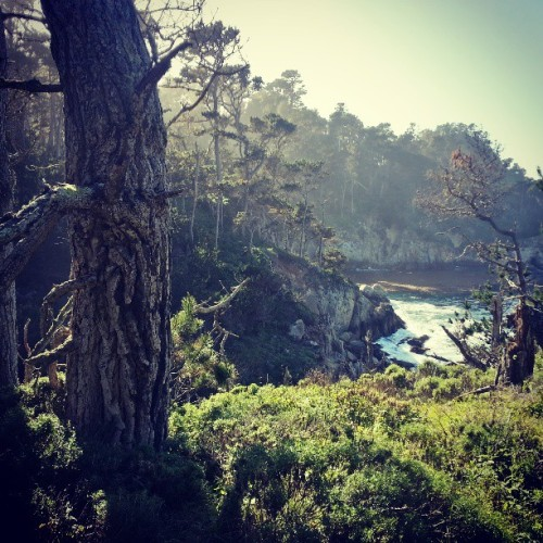 I can't believe this is a real place. (at Point Lobos State Reserve)