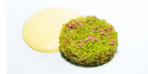foodpornstars:  14th Course: Heather-Smoked Turbot & Moss  Heather-Smoked Turbot & MossTurbot emulsion. Notes: Strips of turbot were curled beneath the head of moss, dotted with petals of heather. The sauce was poured tableside. The dish was presented along with a bowl of heather that had been singed just before service, so that it gave off a subtle smoke at the table. GeraniumCopenhagen, Denmark(February 1, 2013) the ulterior epicure | Twitter | Facebook | Instagram | Bonjwing Photography