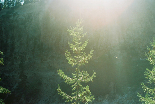 nostalgic-dreaming:  Treeflare by Thomas Powell on Flickr.