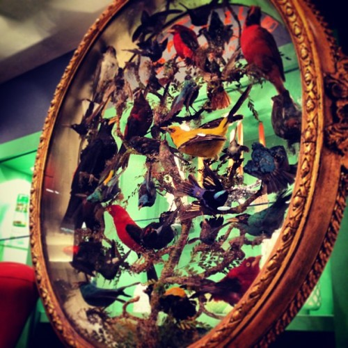 Love & Want this collection of taxidermy tropical birds in a #vintage oval box frame. An utter perfect @theofficialselfridges #findoftheday ! #interior #hubnature #nature #bird #igers #igdaily #igersldn #ignation #igerslondon #instahub #instagrammers #fashion #fashionhub #fashiondaily #blogger #hipster #trendster #london #style #instafashion #londonstyle #londonfashion #indie #prepster #trend #fashiondiaries #ss2013  (at Selfridges & Co)