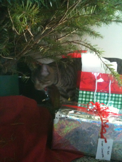 get out of there cat. you are not a gift from Santa.