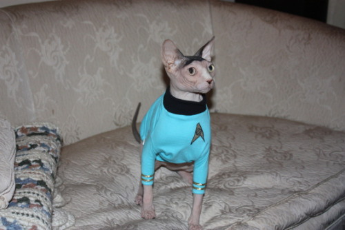 unimpressedcats:  spock? spock what happened to you??? SPOCK???