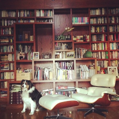 chime-lala:  I love my aunt Karen's house. #eames #bookshelf #library