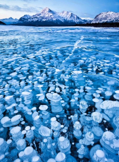 "sosuperawesome:  Frozen Bubbles Suspended Below Abraham Lake Abraham Lake has become world famous, especially amongst photographers. The artificial lake, which lies in the foothills of the Canadian Rockies, is home to a rare phenomenon where bubbles get frozen right underneath its surface. They're often referred to as ice bubbles or frozen bubbles. What causes this to happen? As photographer Fikret Onal explains, ""The plants on the lake bed release methane gas and methane gets frozen once coming close enough to much colder lake surface and they keep stacking up below once the weather gets colder and colder during [the] winter season.""Though a gorgeous sight, this incredible destination isn't for the weak or the weary. ""Even though I've walked on a frozen lake before, Abraham Lake made me feel completely uneasy since the lake was not covered with snow,"" says Onal. ""Even though the icy surface was around 8-9 inches thick, it still scared the hell out of me, not only because of the fact that I could see all the cracks…and the darkness of the lake bottom through the glassy surface, but also [because of] the deep boomy, cracking sounds coming from underneath the lake's surface."" Click through for image sources."